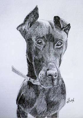 Drawing - Harly by Wade Clark