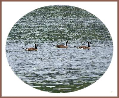 Harmonious Canada Geese Art Print by Will Borden