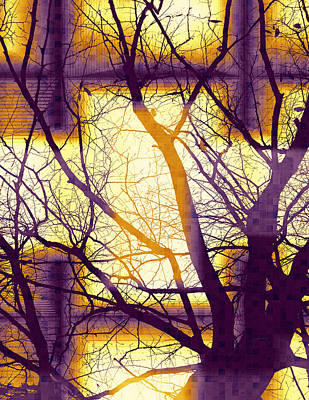 Digital Art - Harmonious Colors - Violet Yellow Orange by Shawna Rowe