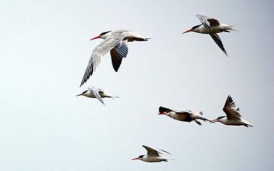 Photograph - Harmony In Flight by AJ  Schibig