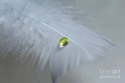 White Feather Photograph - Harmony by Krissy Katsimbras