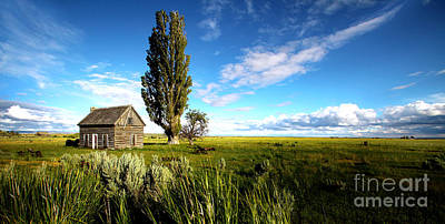 Buckaroo Photograph - Harney County Homestead by Michele AnneLouise Cohen