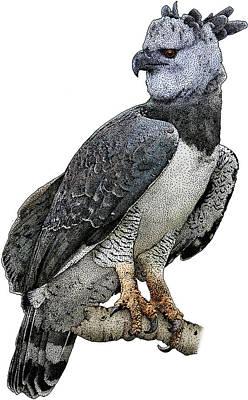 Harpy Eagle Photograph - Harpy Eagle, Harpia Harpyja by Roger Hall