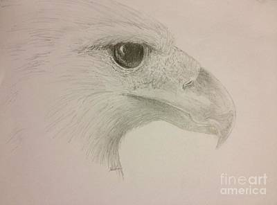 Harpia Harpyja Drawing - Harpy Eagle Study by K Simmons Luna