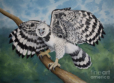 Painting - Harpy Eagle by Tish Wynne