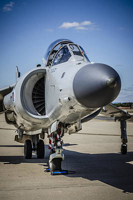 Photograph - Harrier by Bradley Clay