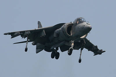 Photograph - Harrier by Donna Corless