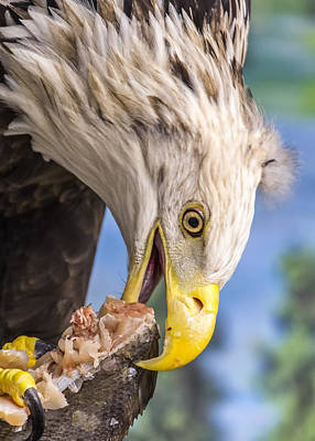 American Eagle Digital Art - Harriet Has Some Sushi by Bill Tiepelman