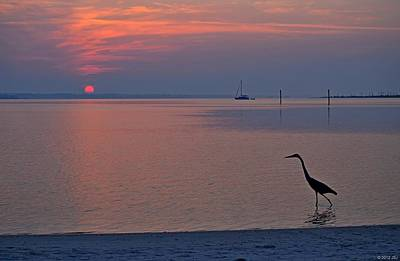 Print featuring the photograph Harry The Heron Fishing On Santa Rosa Sound At Sunrise by Jeff at JSJ Photography