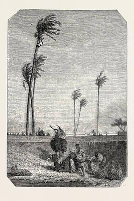 Harvest Dates In Egypt Art Print