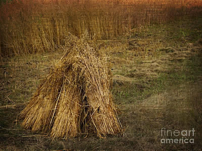 Photograph - Harvest by Inge Riis McDonald