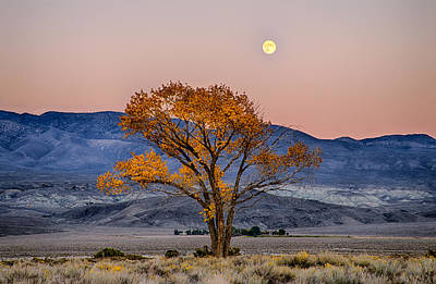 Moonlit Night Photograph - Harvest Moon by Cat Connor