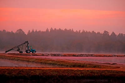 Photograph - Harvest Morning by Kristia Adams