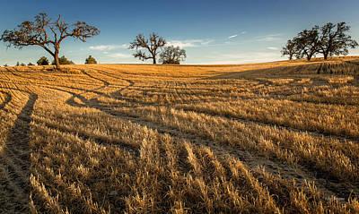 Photograph - Harvest Shadows by Tim Bryan