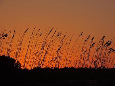 Photograph - Harvest Sky And Sea Oats by Eve Spring