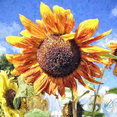 Photograph - Harvest Sunflower by Jeanette Mahoney