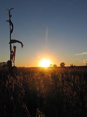 Photograph - Harvest Sunset by Mark C Ettinger