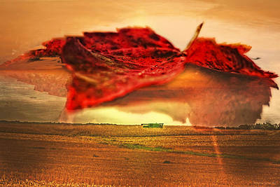 Photograph - Harvest Time by Darlene Bell