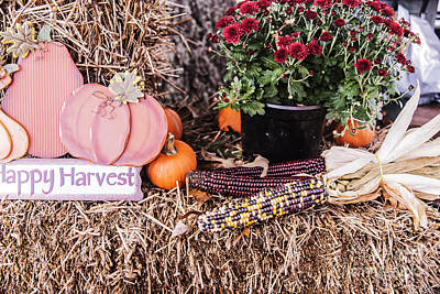 Photograph - Harvest Time by Elvis Vaughn