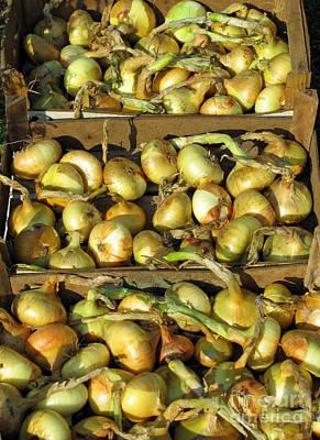 Photograph - Harvest Time. Onions. by Ausra Huntington nee Paulauskaite