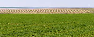Harvested Alfalfa Field Patterns Art Print