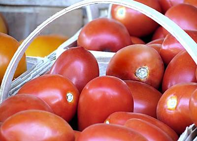 Photograph - Harvested Tomatoes by Janice Drew