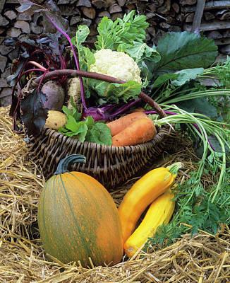 Harvested Vegetables Art Print