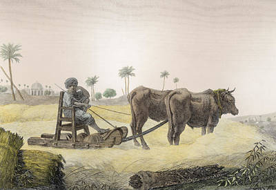 Native Drawing - Harvesting Corn, From Volume II Arts by Nicolas Jacques Conte