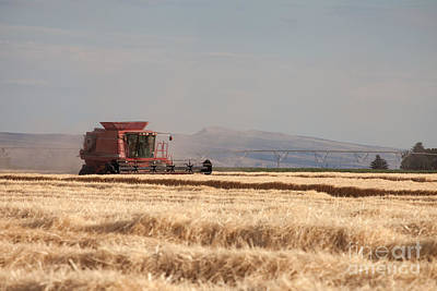 Photograph - Harvesting Grain by Cindy Singleton