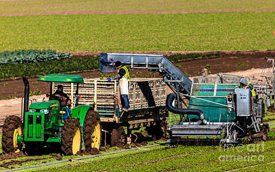 Photograph - Harvesting Spinach by Robert Bales