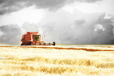 Color Digital Art Photograph - Harvesting The Grain by Cindy Singleton