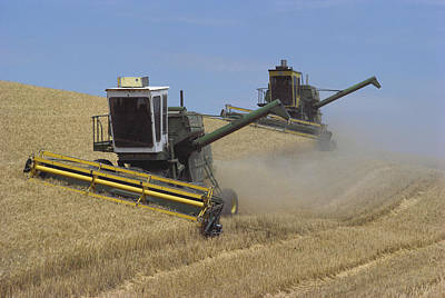 Photograph - Harvesting Wheat by Dan Guravich