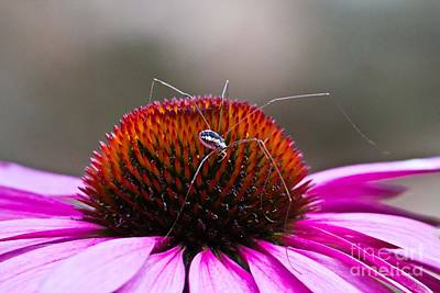 Photograph - Harvestmen  And Purple Flower by Ms Judi