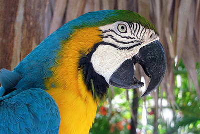 Photograph - Harvey The Parrot 2 by Bob Slitzan