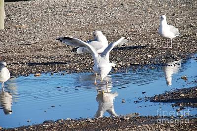 Photograph - Hastings Herring Gulls by David Fowler