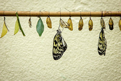 Butterfly Photograph - Hatching Butterflys by Www.victoriawlaka.com