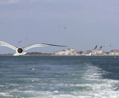 Seagulls Photograph - Hatteras Village And Seagulls 2 by Cathy Lindsey