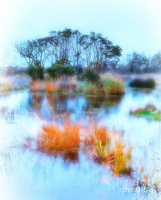 Hatteras Wetlands On The Outer Banks Art Print by Dan Carmichael