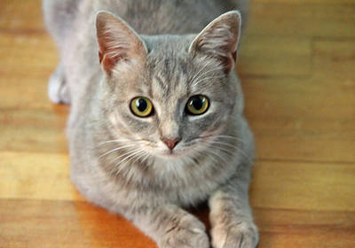 Gray Tabby Photograph - Hattie The Kitty by Cynthia Guinn