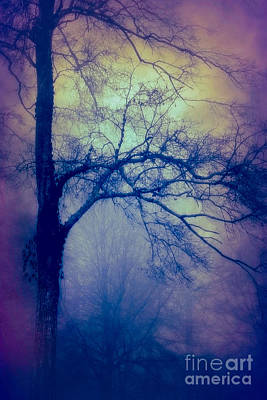 Photograph - Haunted Branches by Judi Bagwell