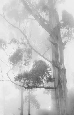 Photograph - Haunted Forest by Jenny Rainbow