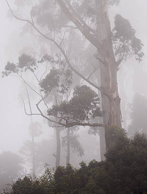 Photograph - Haunted Forest. Nuwara Eliya. Sri Lanka by Jenny Rainbow