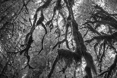 Olympic National Park Photograph - Haunted by Kristopher Schoenleber