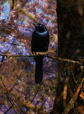 Print featuring the digital art Haunting Grackle by J Larry Walker