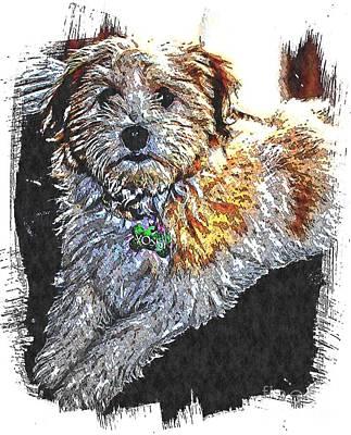 Havanese Puppy Art Print