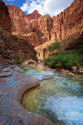 Havasu Creek Art Print by Inge Johnsson
