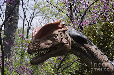 Animals Royalty-Free and Rights-Managed Images - Have a Jurassic Day by Scott Evers