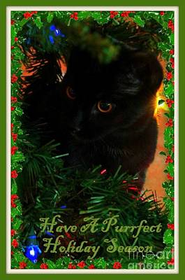 Photograph - Have A Purrfect Holiday Season by Jennifer E Doll