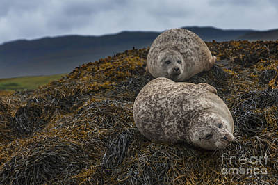 Photograph - Having A Lazy Day by Diane Macdonald