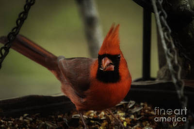 Photograph - Having A Snack by Amanda Collins
